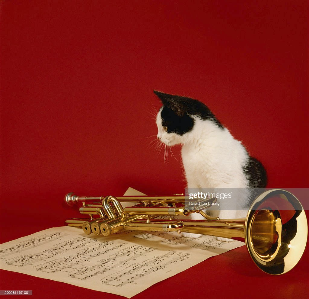 Image result for kitten with trumpet