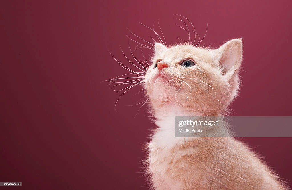 Kitten with whiskers : Stock Photo