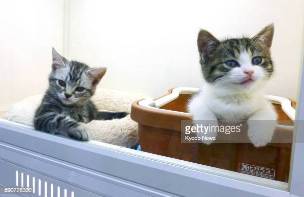 Kittens are kept in display cages at a Zoo pet shop in Tokyo's Roppongi district on Dec 5 2017 ==Kyodo