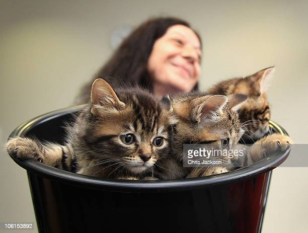 Kittens are seen in a bucket before they meet Camilla, Duchess of Cornwall's as she visits Battersea Dog and Cat's Home on October 27, 2010 in...