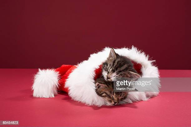 Kittens asleep together in Christmas hat