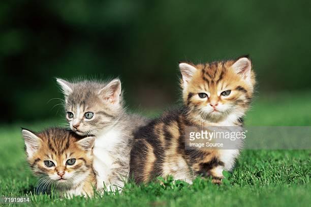 Kittens in a field