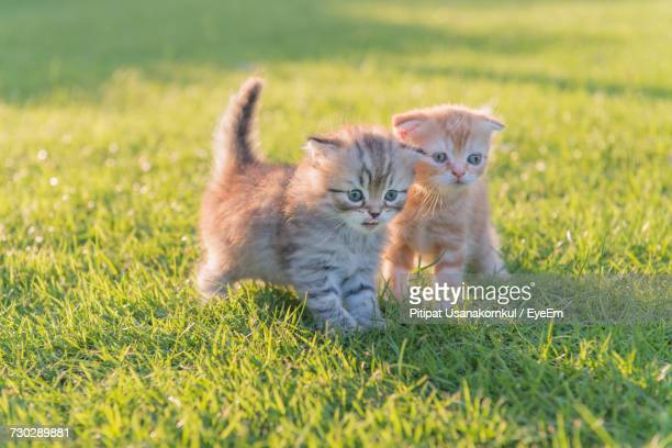 kittens in a grass - two animals stock pictures, royalty-free photos & images