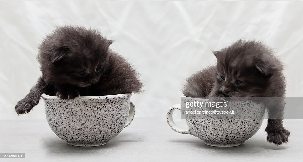 Two kittens inside of two grey cups.