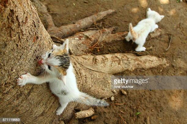 Kittens learning to climb on tree