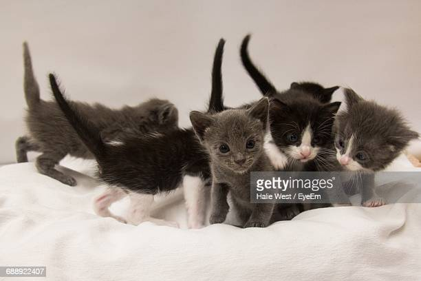 Kittens On Cushion Against White Background