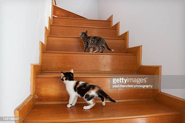 Kittens on staircase