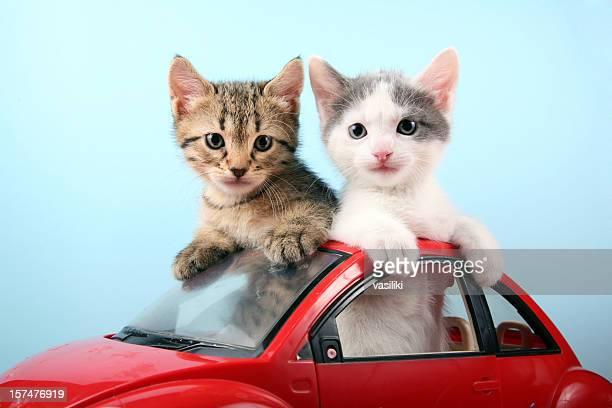 Kittens on summer vacations