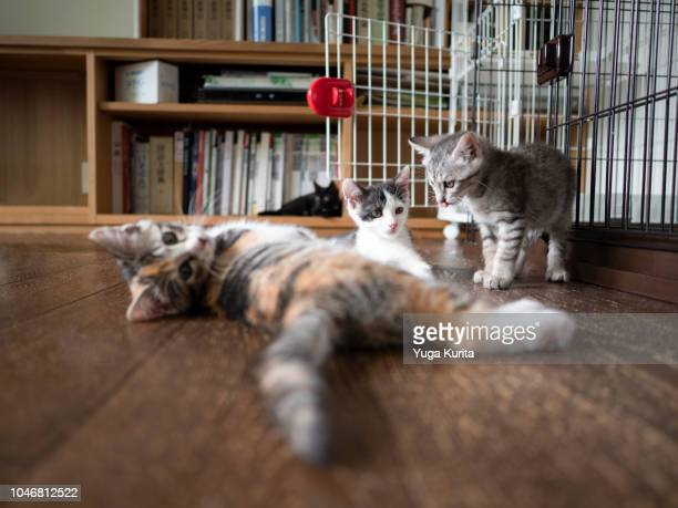 Kittens on the Floor in a Living Room
