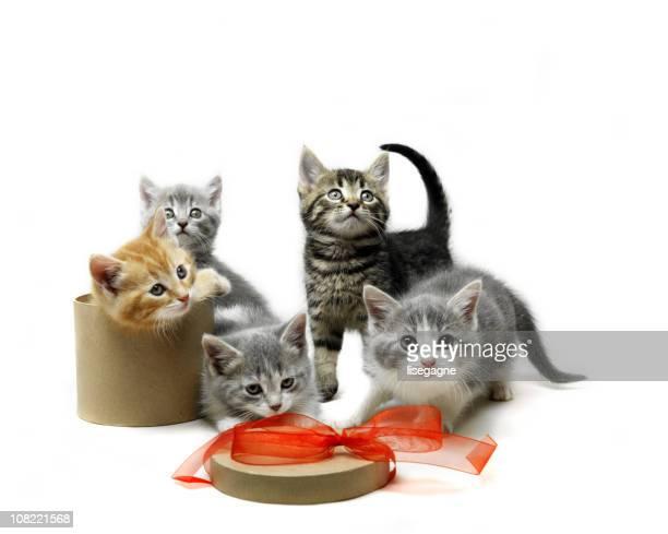 chatons - cinq animaux photos et images de collection