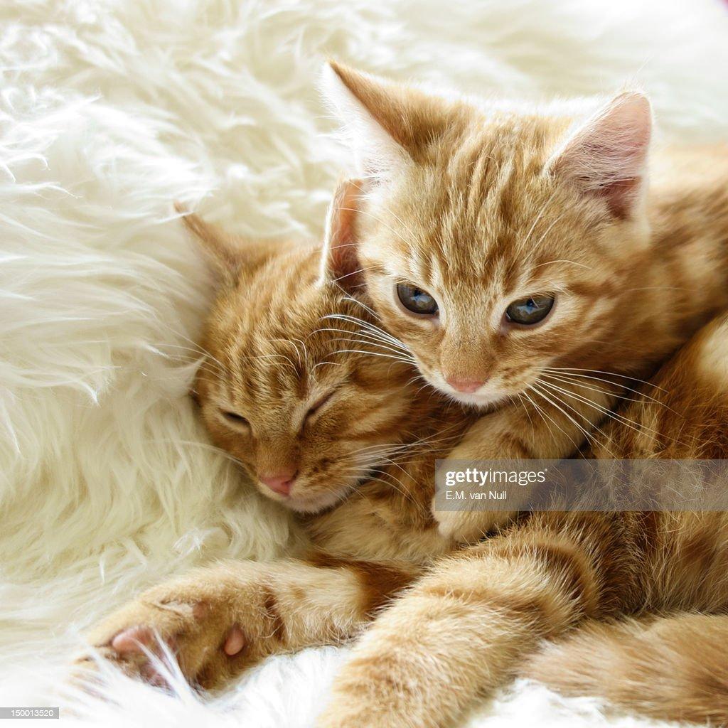Kittens : Stockfoto