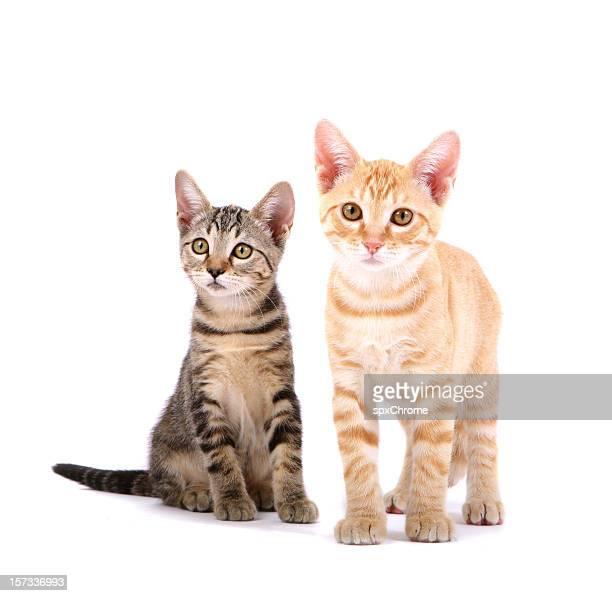 kittens - 2匹 ストックフォトと画像