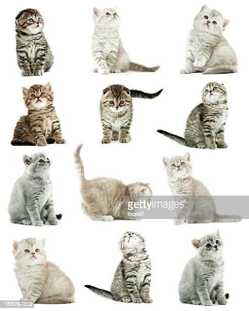 kittens - undomesticated cat stock pictures, royalty-free photos & images