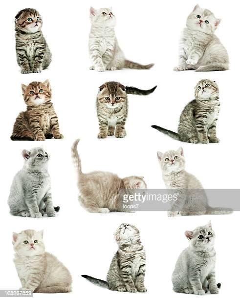 kittens - felino salvaje fotografías e imágenes de stock