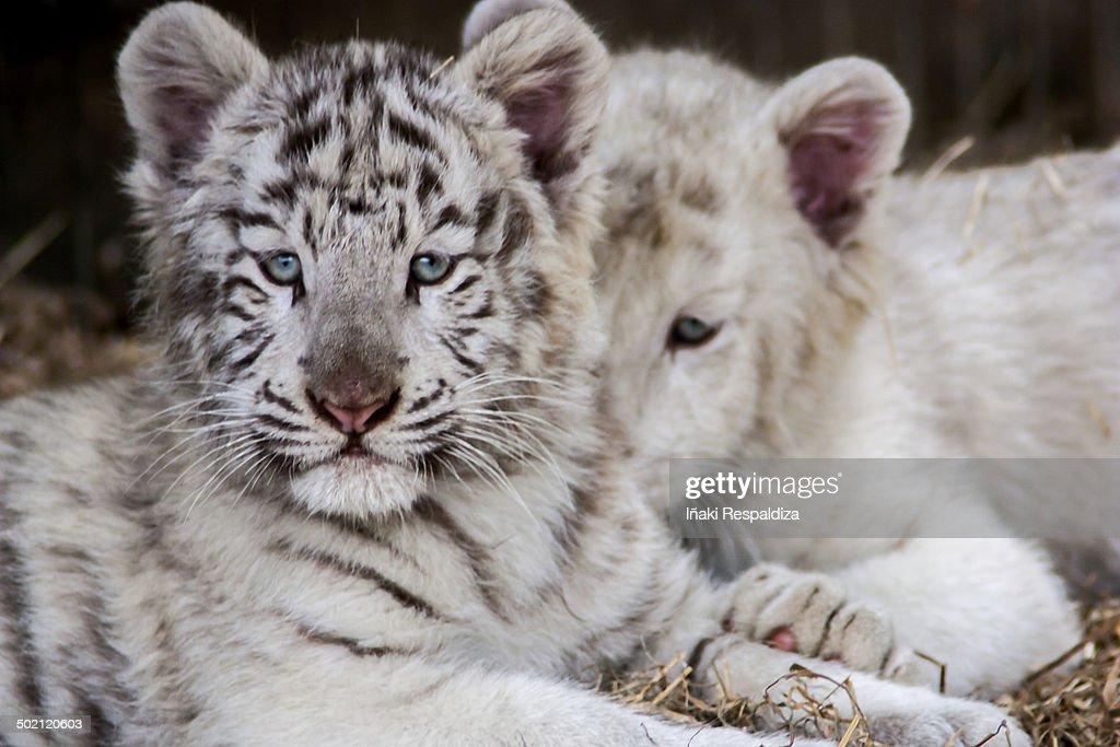 Kittens : Foto de stock