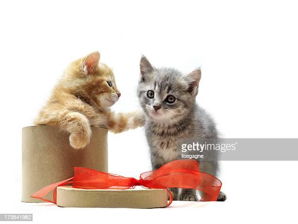 Kätzchen spielt