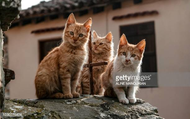 Kittens sit atop a shrine in the village of Lazanias, on the southeastern slopes of the Troodos mountains, about 40 kms southwest of the Cypriot...