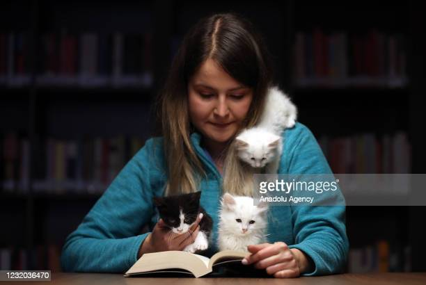 "Kittens sit on a hand and a shoulder of a library user as she reads a book at ""Kedili Tekke"" , used as a library at present in Bursa, Turkey on March..."