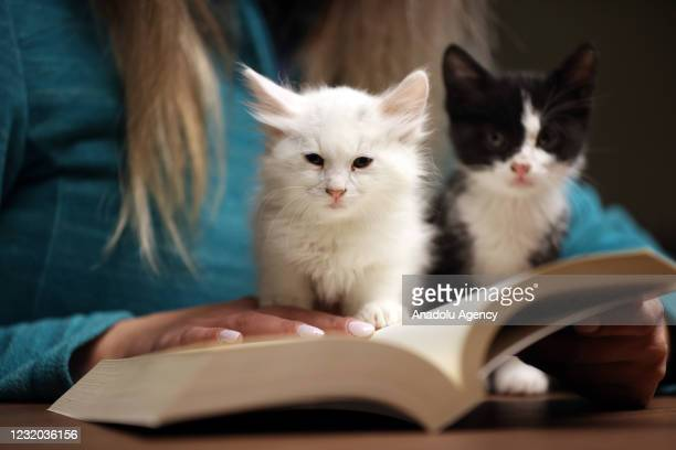 """Kittens sit on a hand of a library user as she reads a book at """"Kedili Tekke"""" , used as a library at present in Bursa, Turkey on March 30, 2021. The..."""