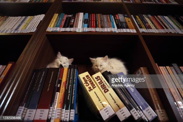 "Kittens sit on top of the books on a shelf at ""Kedili Tekke"" , used as a library at present in Bursa, Turkey on March 30, 2021. The library used to..."