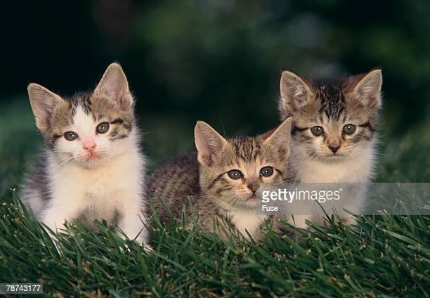 Kittens Sitting in Grass