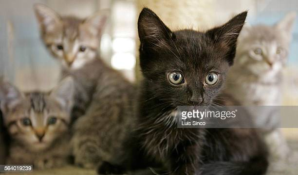 Neuter Stock Fotos Und Bilder Getty Images