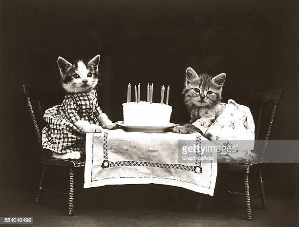 Kitties at a birthday party with a cake from a series of dressed kittens in various human situations circa 1914 Silver print