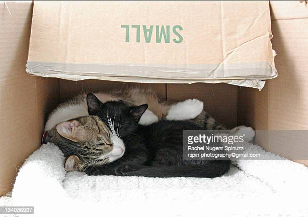 kitties in box