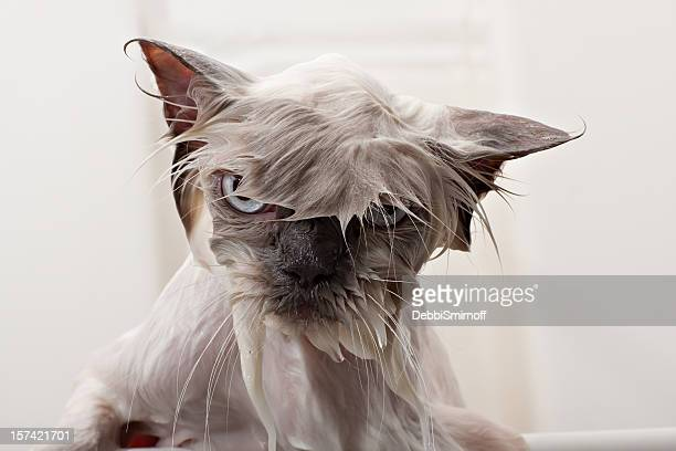 kitty bath time - humour stock pictures, royalty-free photos & images