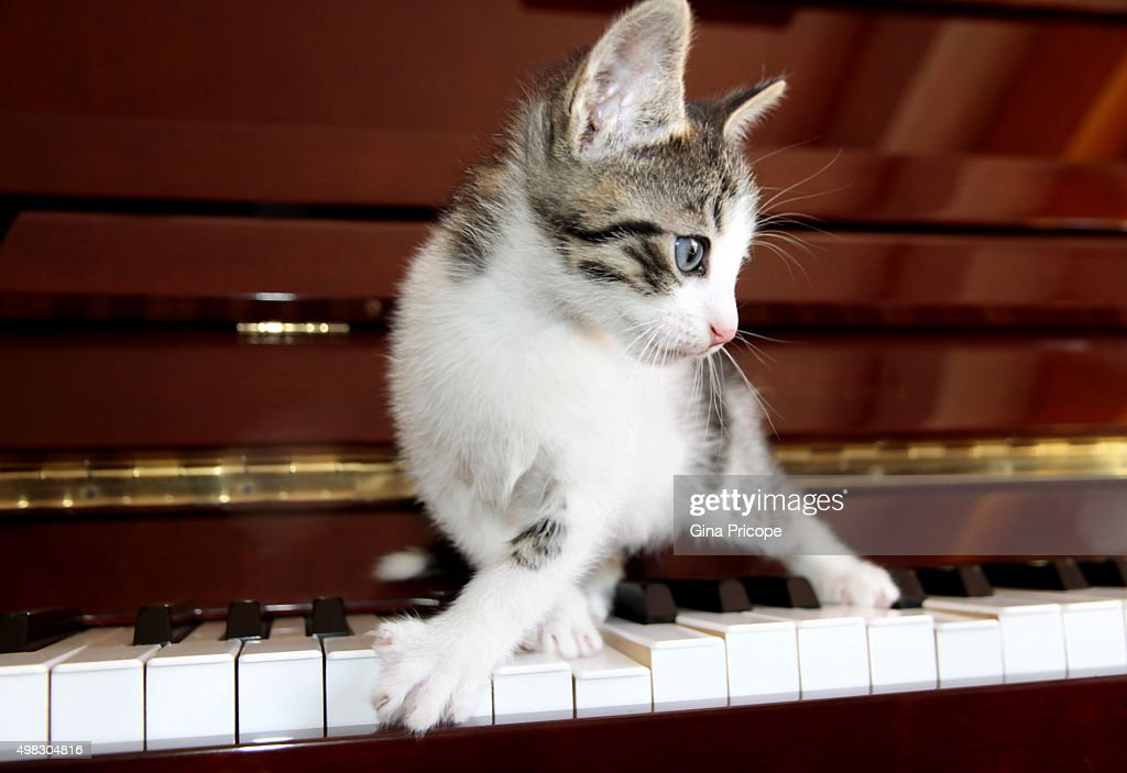 Small cat on the piano keyboard