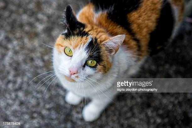 a kitty cat - green eyes stock pictures, royalty-free photos & images