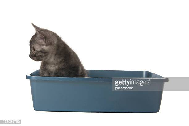 kitty going potty - litter box stock photos and pictures