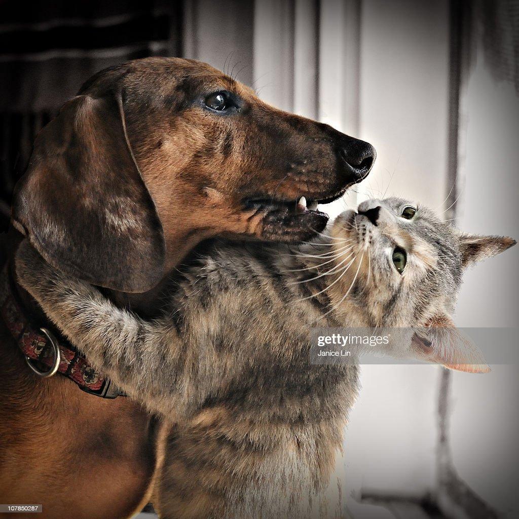 Kitty hugs dog : Stock Photo