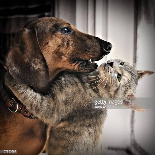 Kitty hugs dog