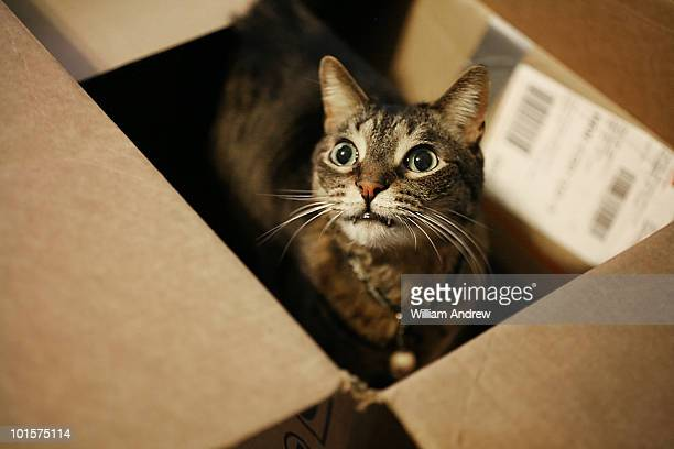 Kitty in shipping container