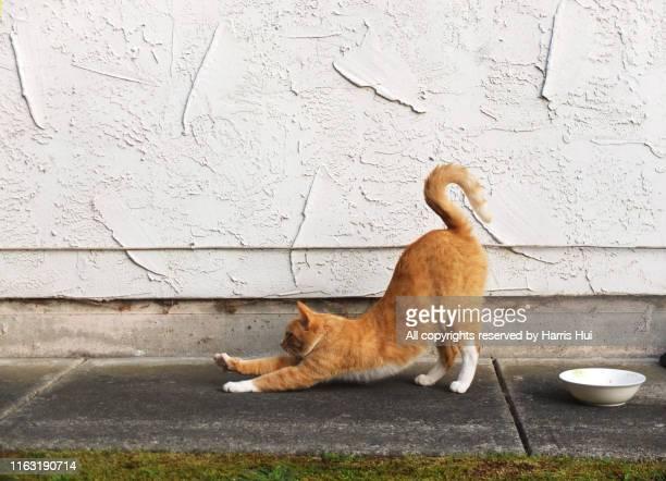 kitty kitty has a j stretch - strekken stockfoto's en -beelden