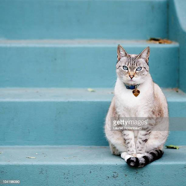 kitty on blue steps