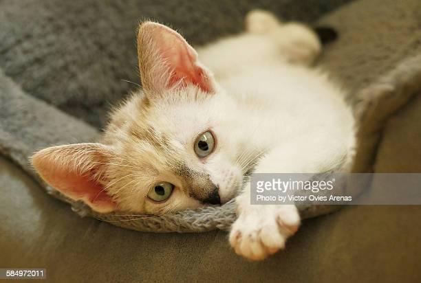 kitty - victor ovies fotografías e imágenes de stock