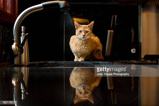 Kitty reflected at the sink