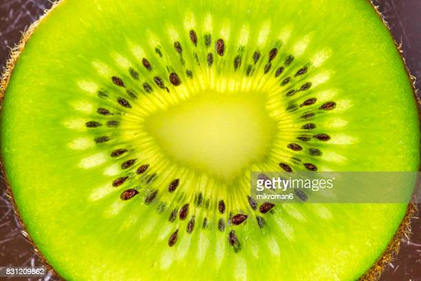 kiwi fruits - kiwifruit or chinese gooseberry close up - kiwi fruit stock pictures, royalty-free photos & images