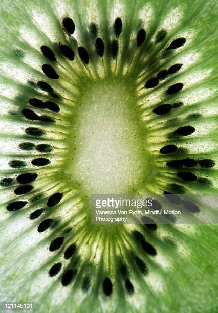 kiwi - vanessa van ryzin - fotografias e filmes do acervo