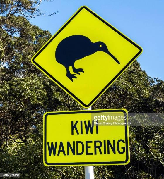 kiwi wandering - kiwi bird ストックフォトと画像