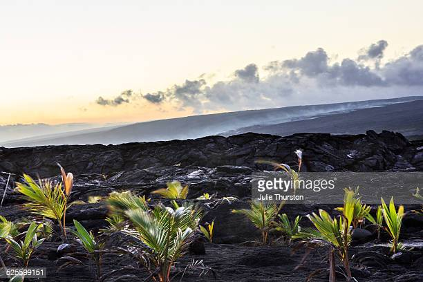 k?lauea lava flow - pu'u o'o vent stock pictures, royalty-free photos & images