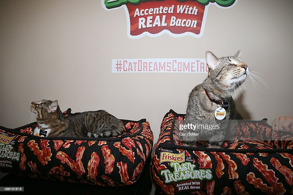 Klaus (L) and Oskar the Blind Cat attend South by Southwest at Haus of Bacon on March 13, 2015 in Austin, Texas.