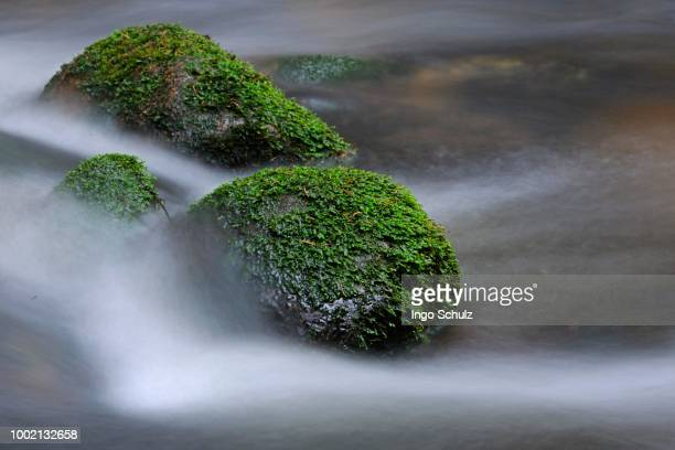 kleine ohe mountain brook, close-up with flowing movement, nationalpark bayrischer wald national park, bavaria, germany - wald stock pictures, royalty-free photos & images
