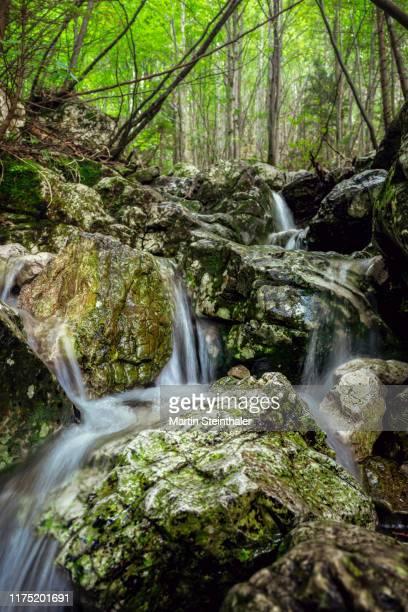 kleiner wasserfall mit klarem wasser in mischwald - wasser stock pictures, royalty-free photos & images