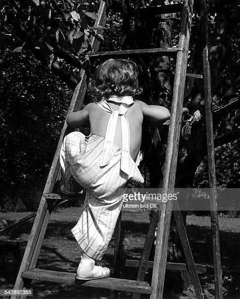 Kleines Mädchen klettert eine Leiter aneinem Apfelbaum hoch 1952