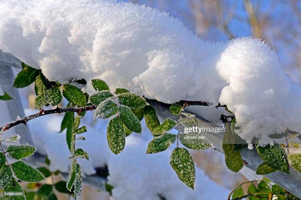 Garten Im Winter im winter pictures getty images