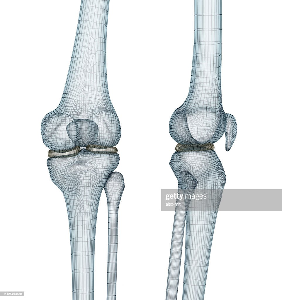 Knee Joint Anatomy Medically Accurate Wire 3d Illustration Stock