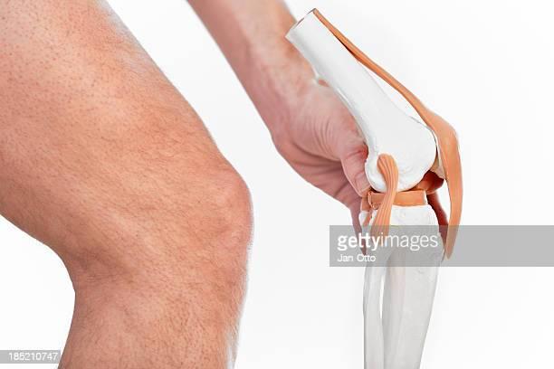 Articulation de genoux